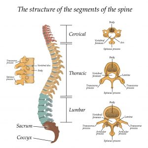 back pain, spine, posture, alignment